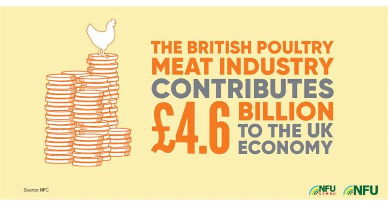 British poultry industry 4.6 bn to economy_72229