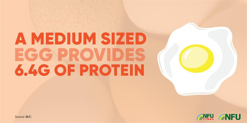 Medium sized egg provides 6.4g protein infographic_72225