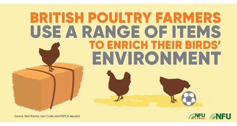 Poultry infographic enriching birds environment_72228