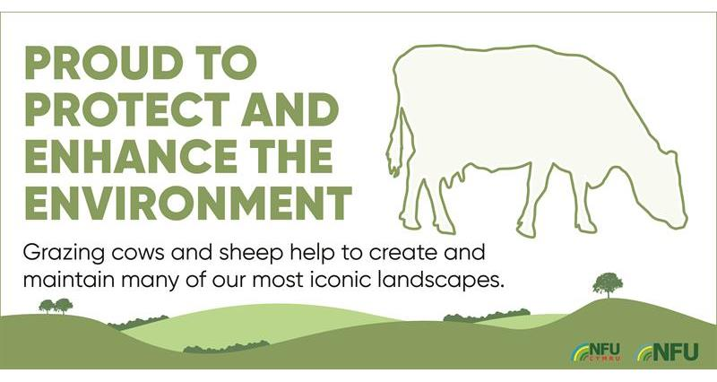 Grazing cows and sheep infographic_70606