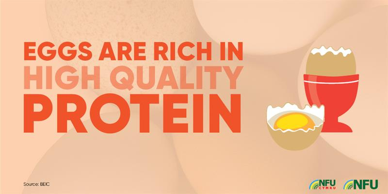 Eggs rich in high quality protein infographic_72224