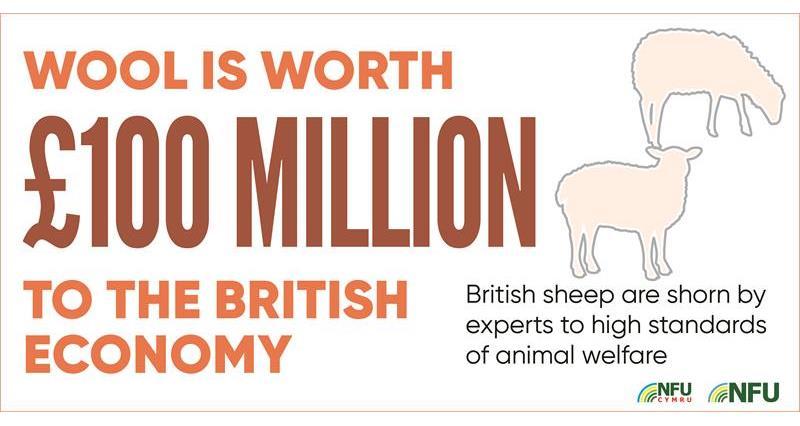 Wool worth £100m infographic_70612