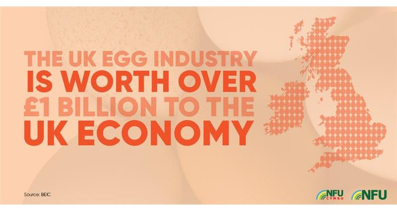 UK egg industry worth over 1bn to economy_72219