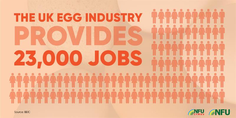 UK egg industry provides 23,000 jobs_72220
