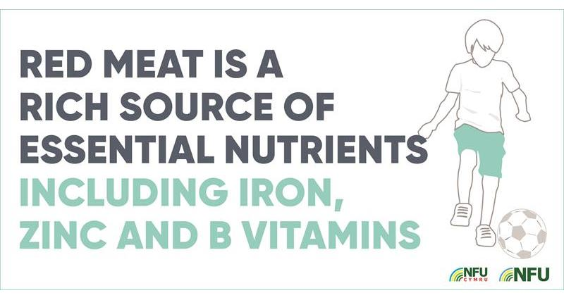 Red meat source of nutrients infographic_70613