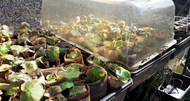 Propagator, #LockdownLearning_72984