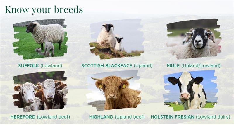 Know your breeds _68771
