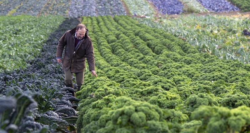 Farndon Fields Farm Horticulture Farming Families _60376