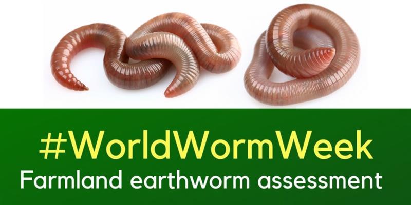 World worm week_61962