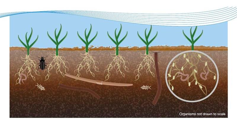 ahdb introduction to soil biology _64445