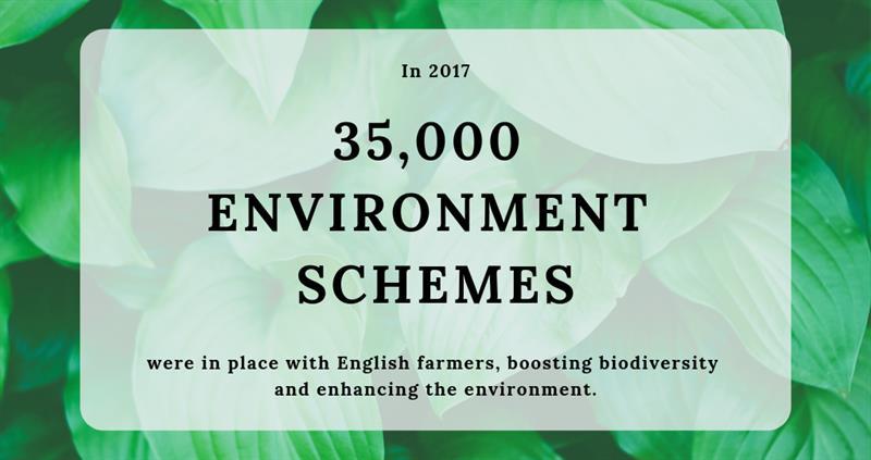 environment schemes canva_60632