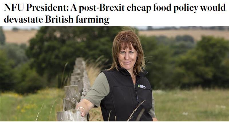 Irish Independent headline Minette Batters_73622