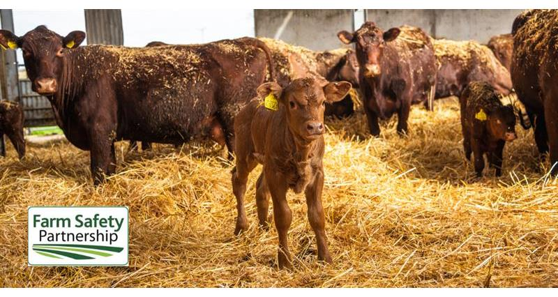 How to stay safe when around livestock