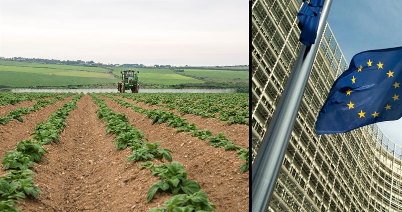Potato spraying and European Commission_58907