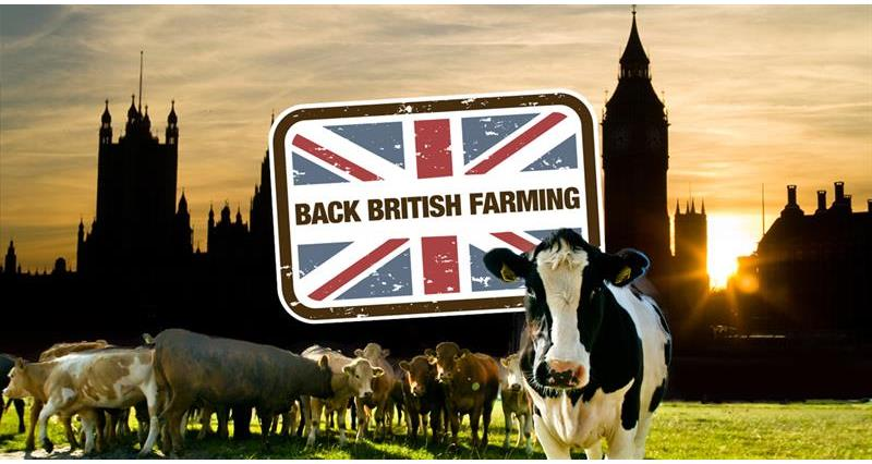 cow Westminster back British farming_70556