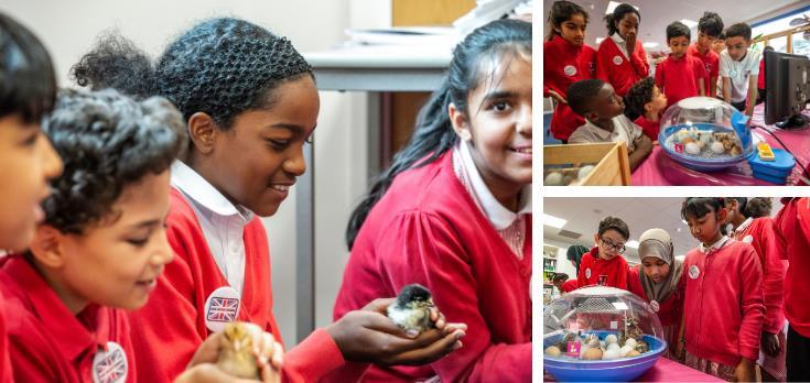 Farmvention Ronald Ross Primary School_67368