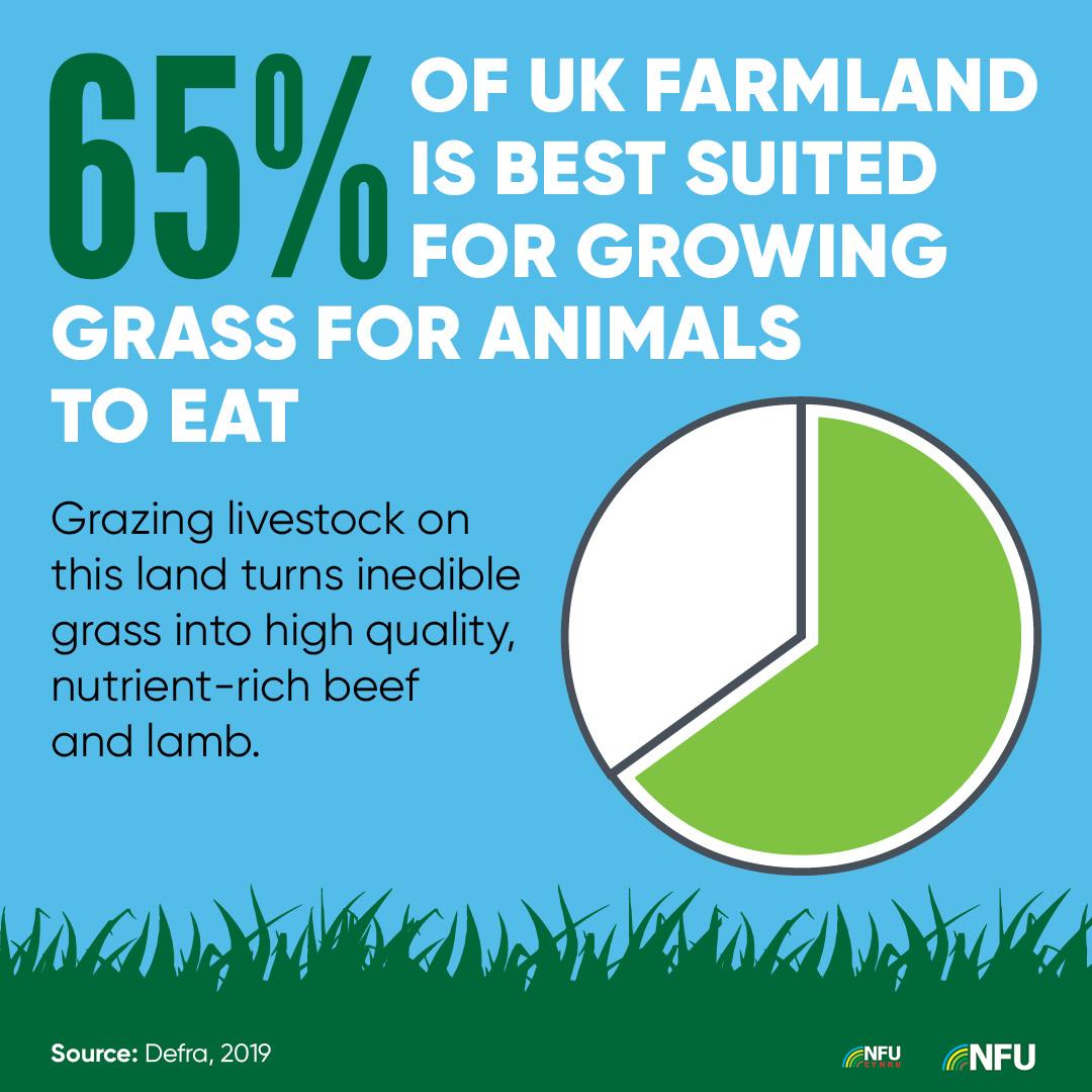 NFU Instagram infographic growing grass