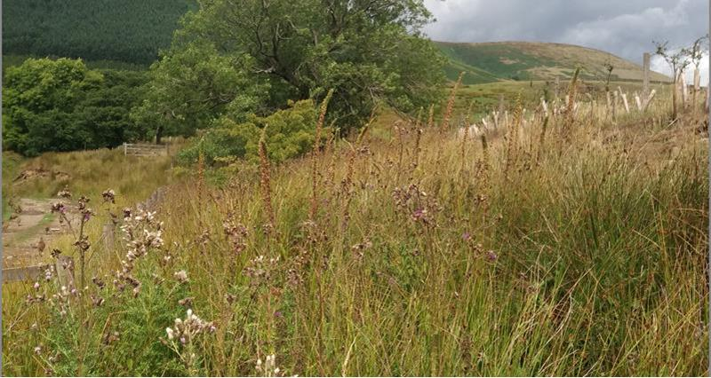 John Alpe Farm_61261