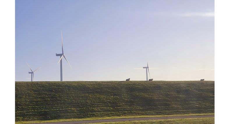 Sheep grazing on dikes in Netherlands with Windmills_71033