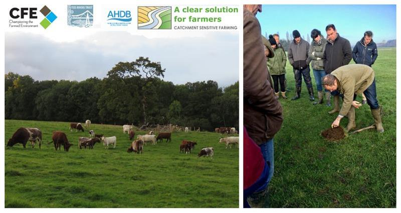 Optimising the Benefits of Grassland