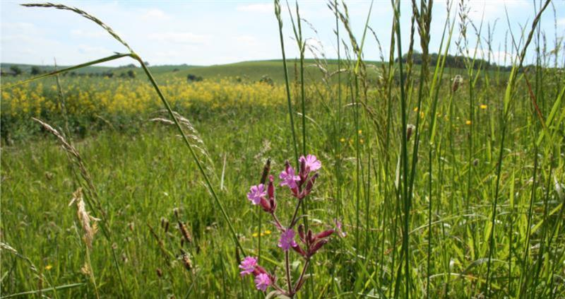 Arable land reverted to grass
