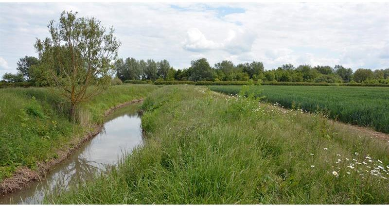 Grass buffer strips next to a watercourse or pond