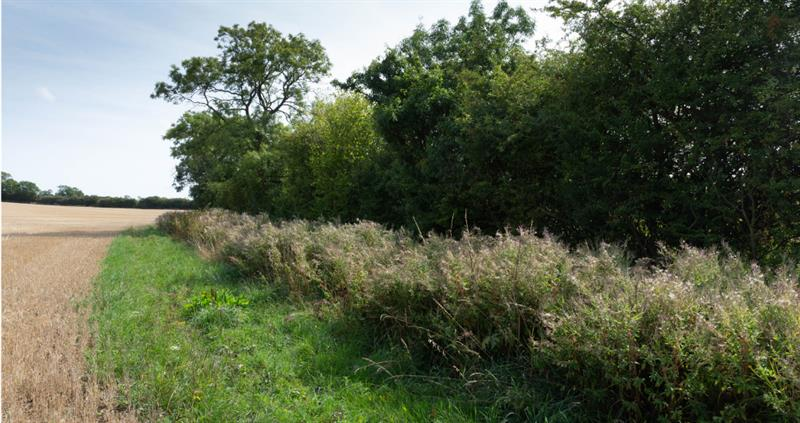 Maximise the value of your field boundaries