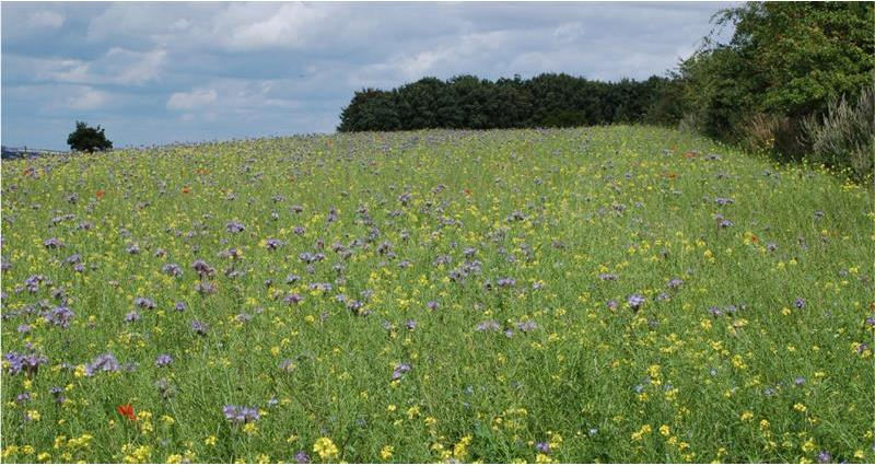 Countryside Stewardship Mid Tier: Important dates for 2020