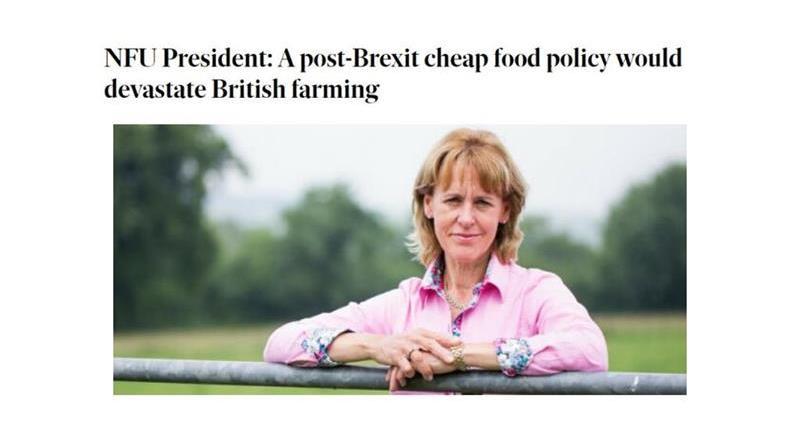 Minette Batters Irish Independent column on food standards_72749