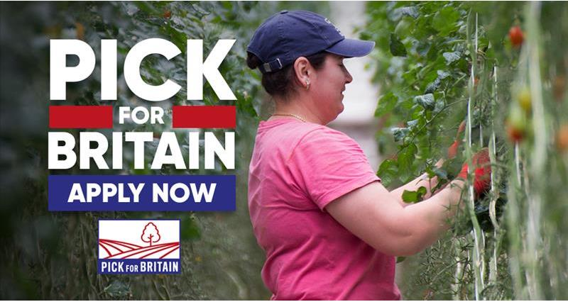 Pick For Britain_73413