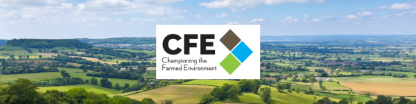 CFE Newsletter - May 2021