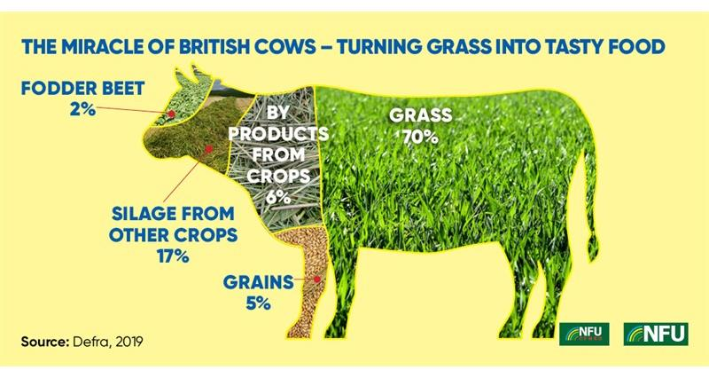 Cattle feed infographic_69586