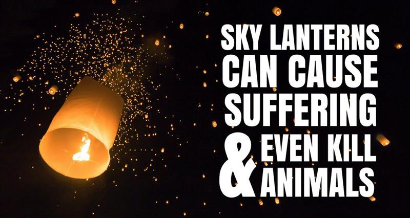 Sky lanterns_48042