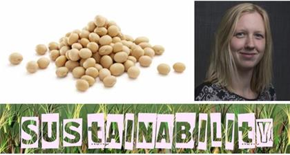 Making soya sustainable