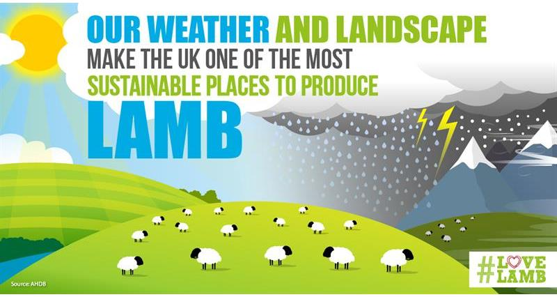 AHDB love lamb week_74598