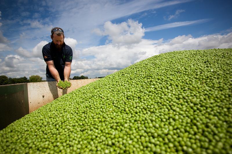 Great British Pea Week 2020_73957