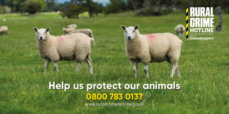 Protect Animals Sheep Twitter_70072