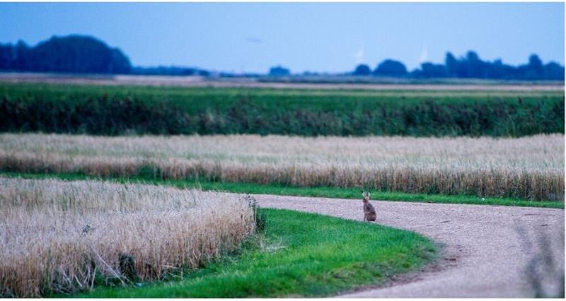 Hare on Track_69417
