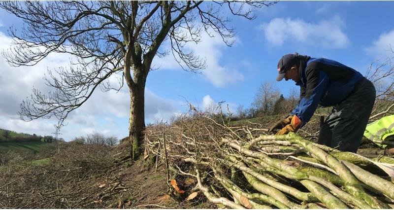Tree planting James Robinson _69674