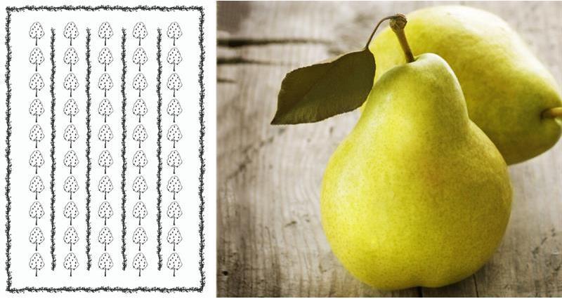pears david long _72166