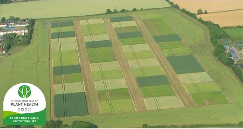 Sustainability Trial for Arable Rotations (STAR)