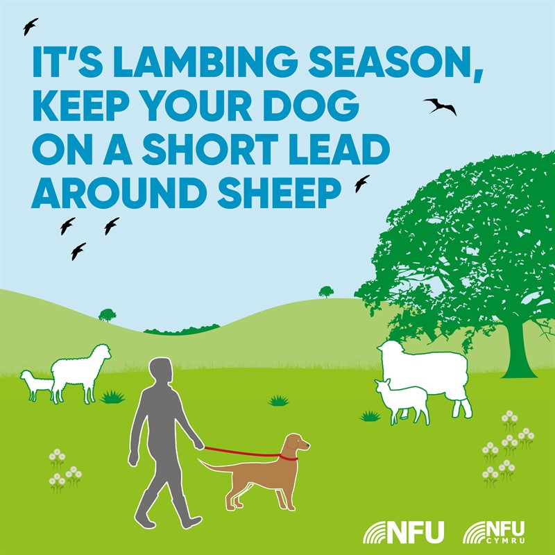 Countryside Code lambing season NFU Facebook Instagram infographic