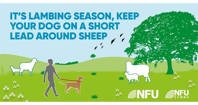 Countryside Code lambing season NFU Twitter infographic