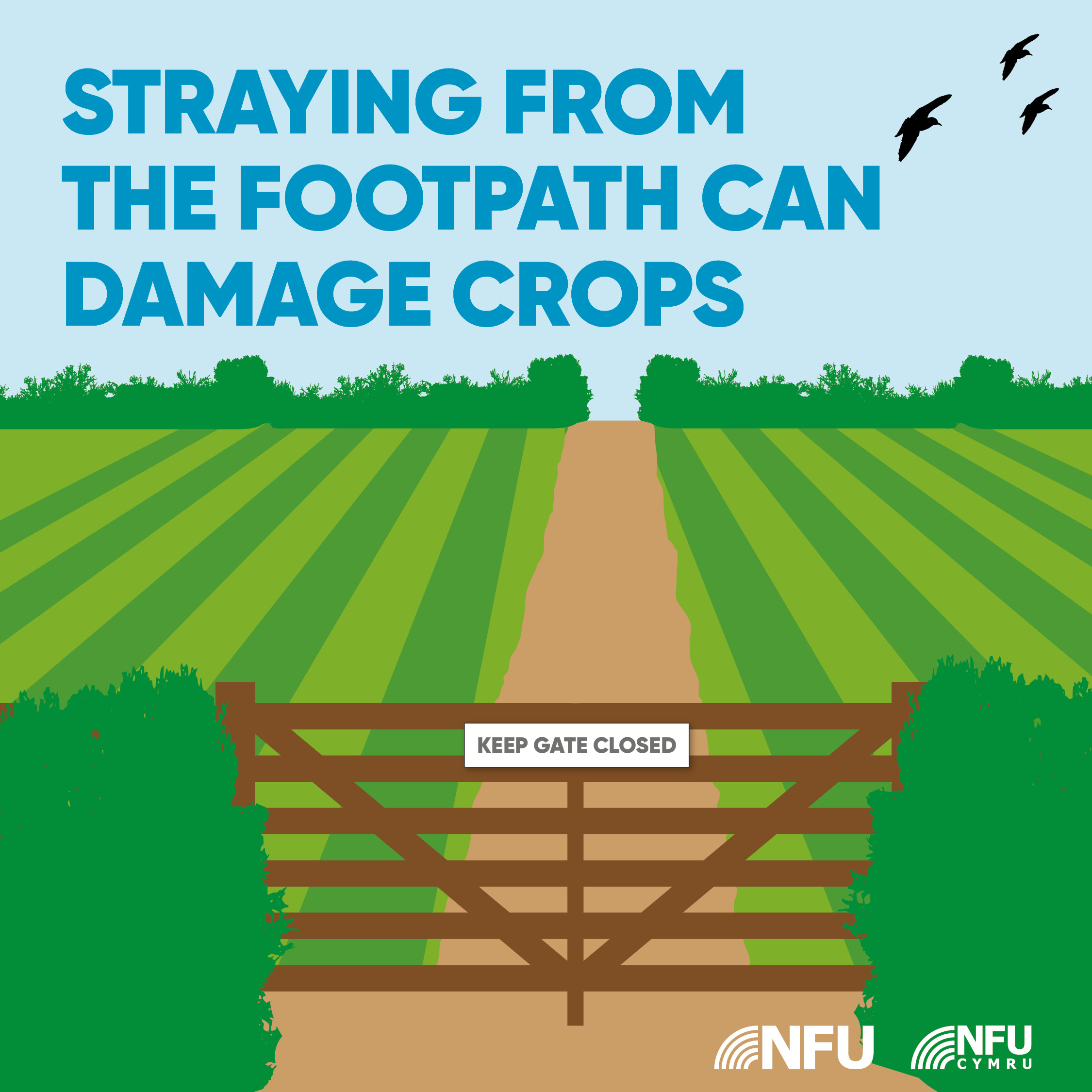 Countryside Code straying from footpath can damage crops NFU Facebook Instagram infographic