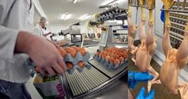 nfu poultry processing labour shortages.png_79931
