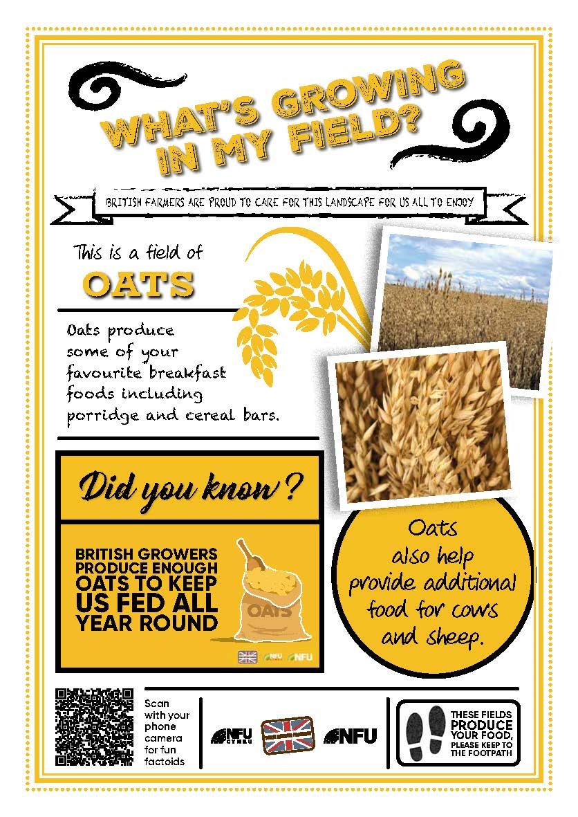 What's growing in my field – oats