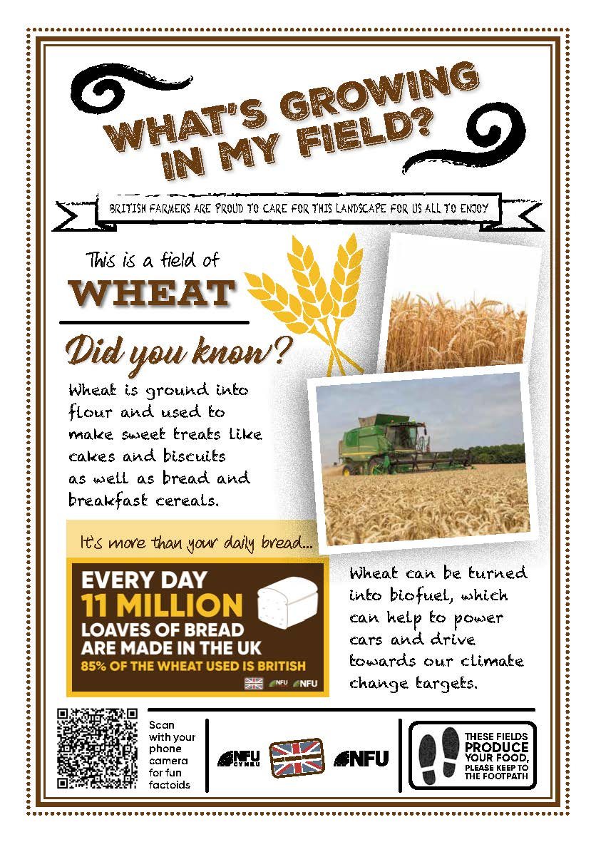What's growing in my field – Wheat