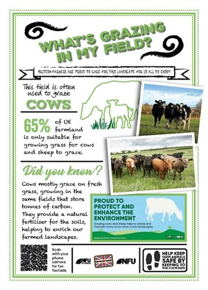 What's growing in my field – cattle grazing