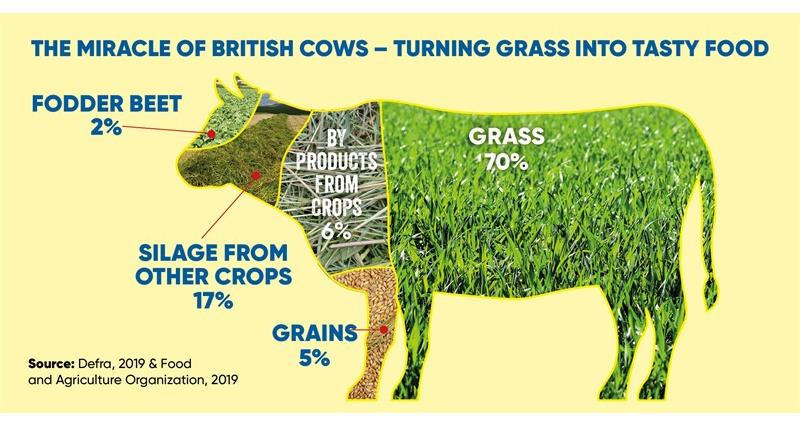 NFU Twitter infographic cattle feed