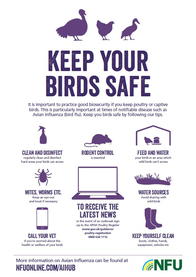 Keep your birds safe poster
